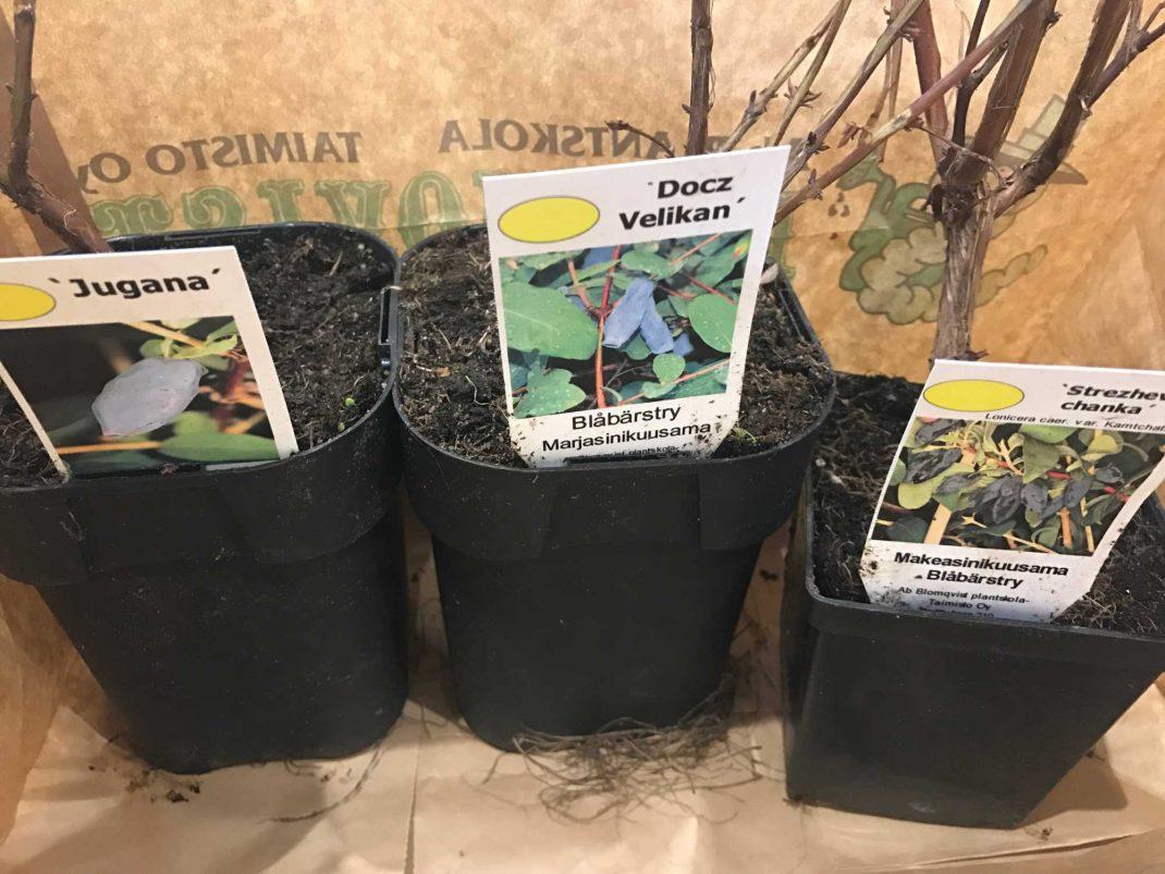 Plantor som står i en papperkasse.