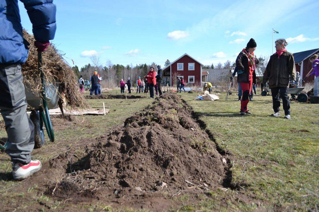 En vall med grästorvor i blivande köksträdgård. Grass sod beds.