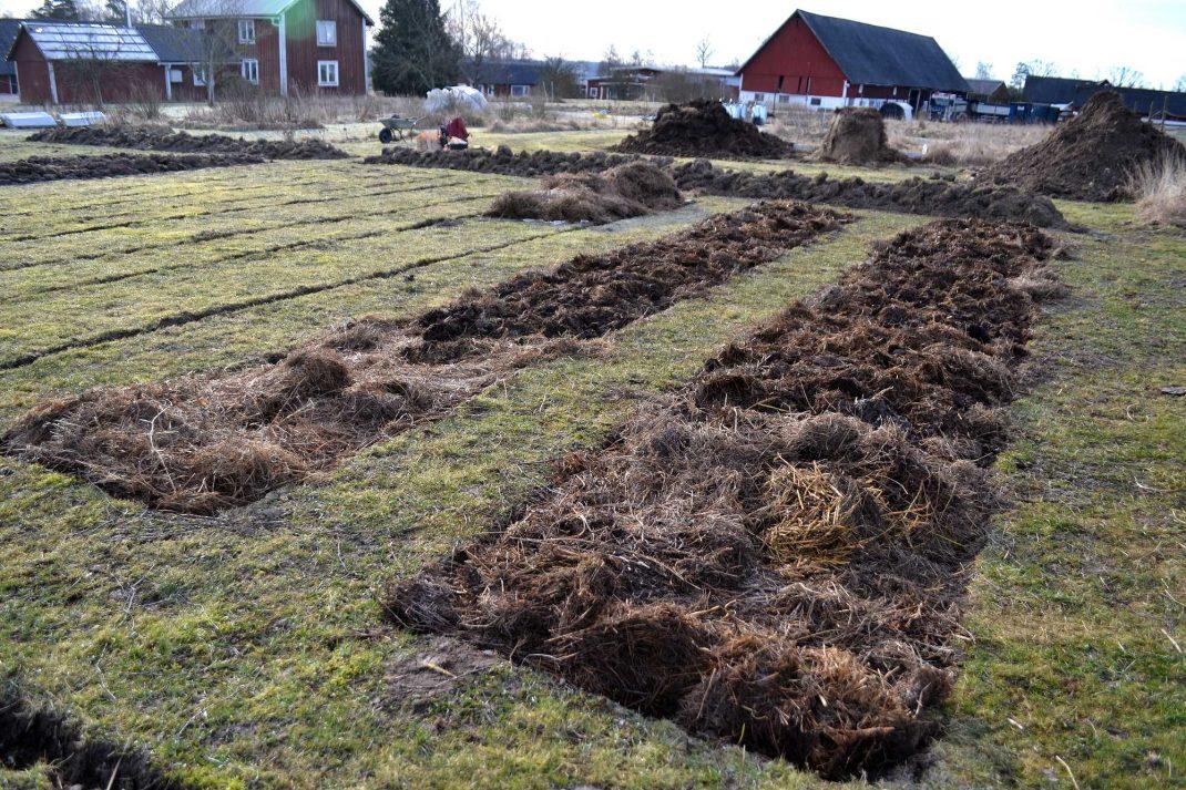 En ny köksträdgård med odlingsbäddar. New garden beds.