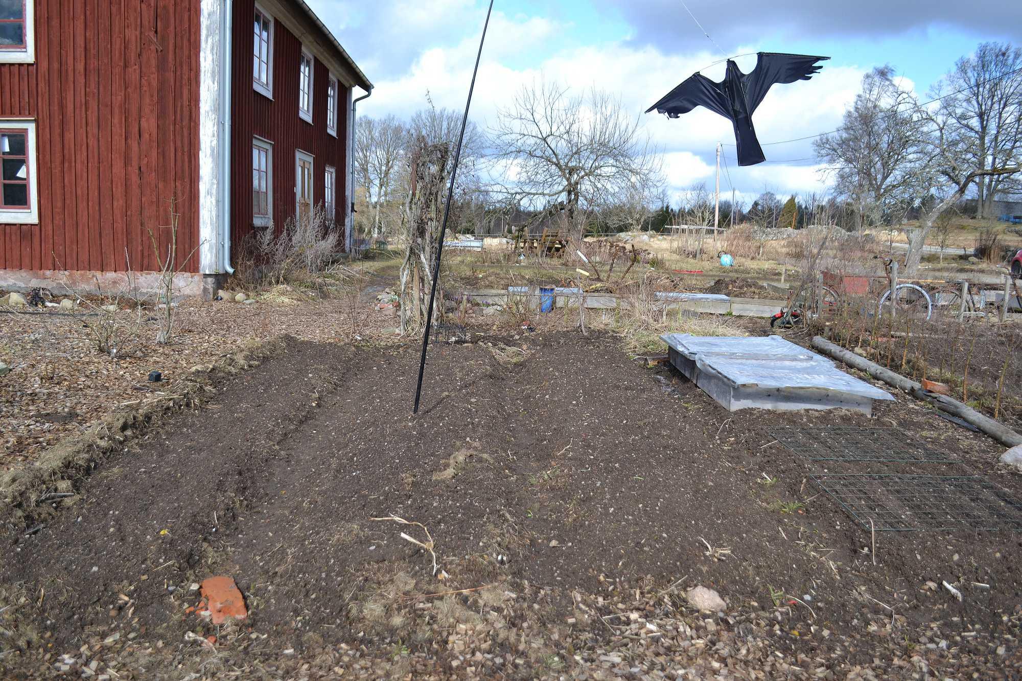 En del av köksträdgården med upphöjda bäddar.