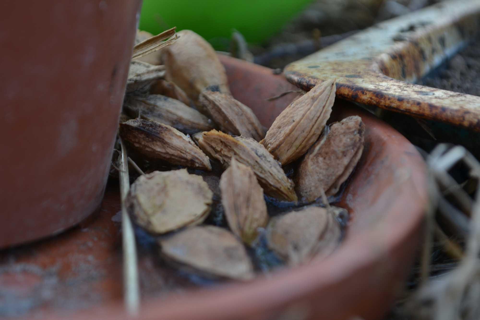 Plommonkärnor på ett keramikfat.