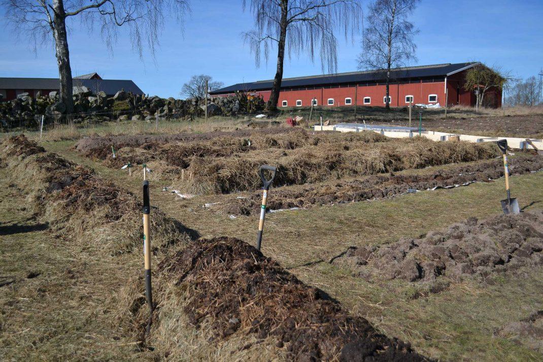 Blivande köksträdgård med odlingsbäddar. Grass sod beds.