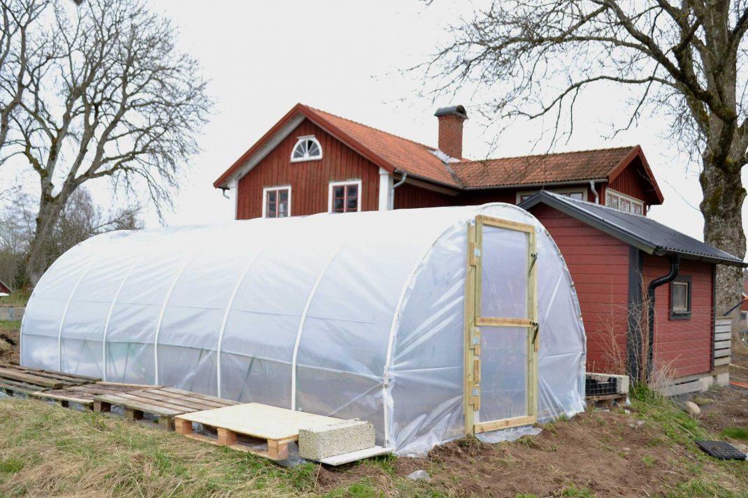 Ett tunnelväxthus i bågform med vit plast.