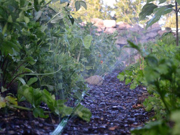 En plantering med vattenslang som skjuter upp vatten i luften.