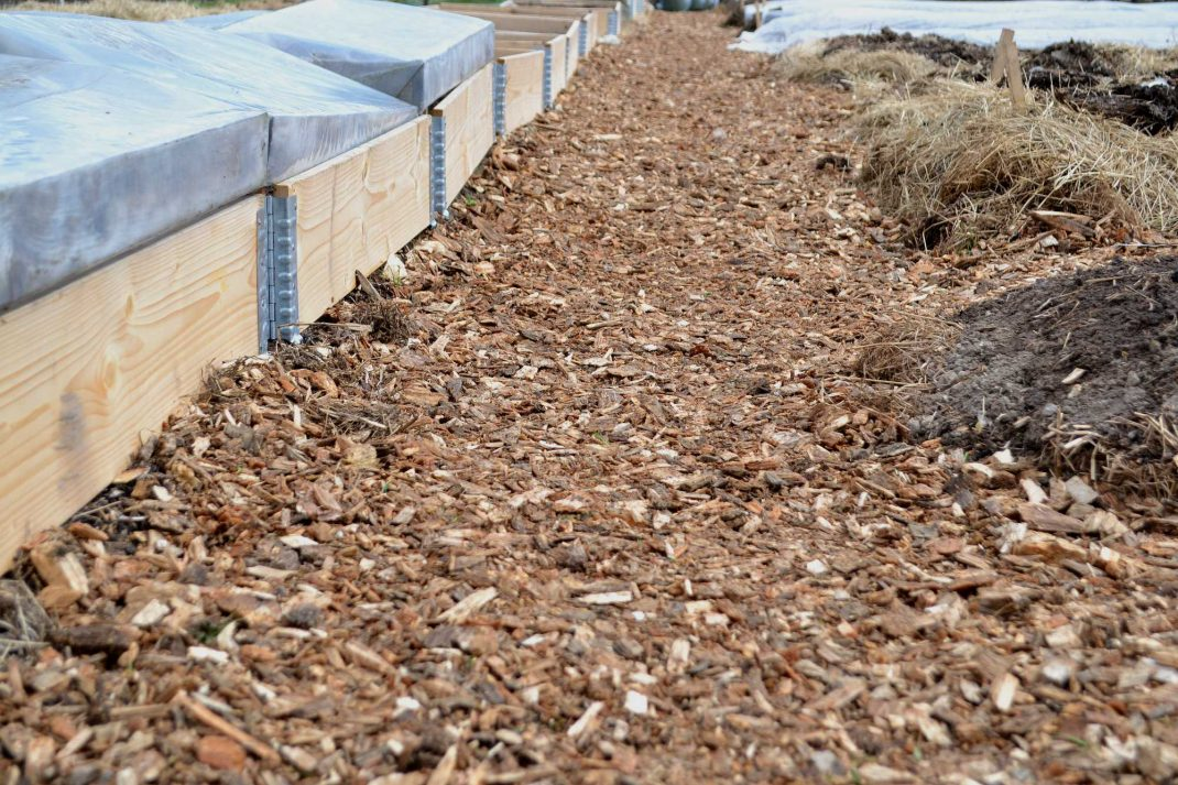 träflis längs en rad med pallkragar. Wood chip garden paths, wood chips along the pallet collar beds.