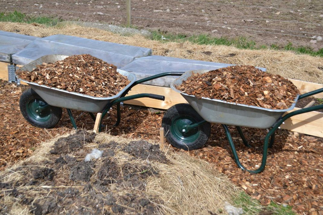 Träflis i skottkärror. Wood chip garden paths, wood chips in a wheel barrow.