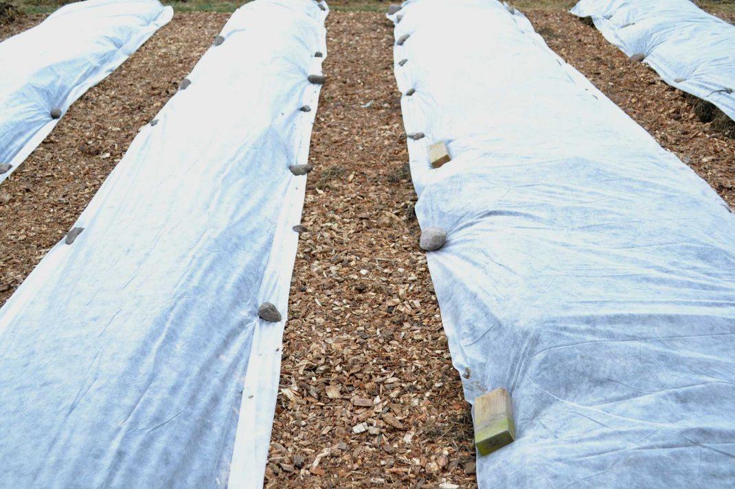 Odlingsbäddar med fiberduk och träflis i gångarna emellan.