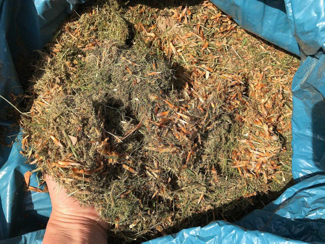Ett gulnande gräsklipp i en sopsäck.