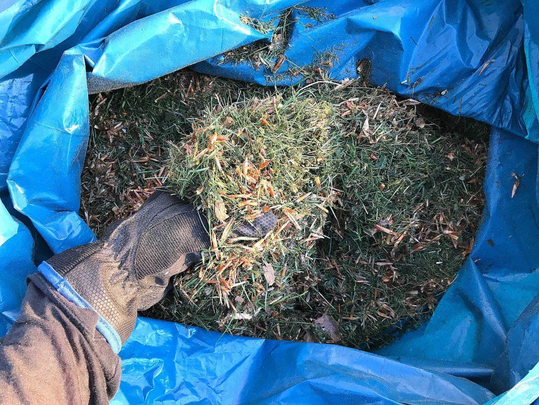 Gräsklipp i en blå sopsäck.