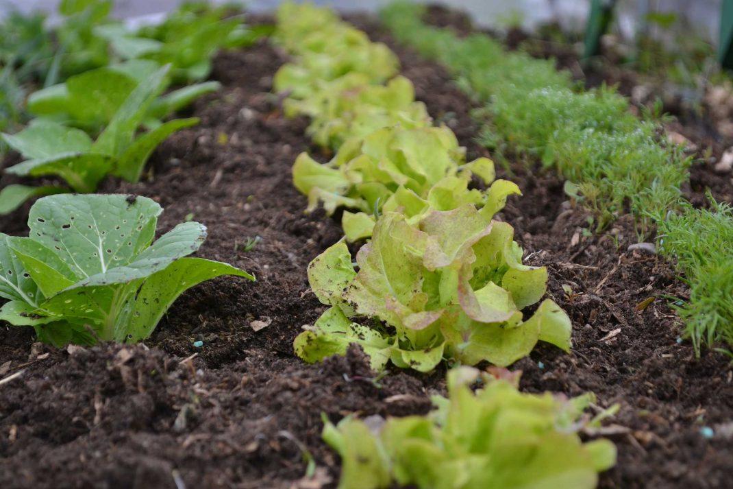 En fin plantering med gröna växter i olika nyanser.