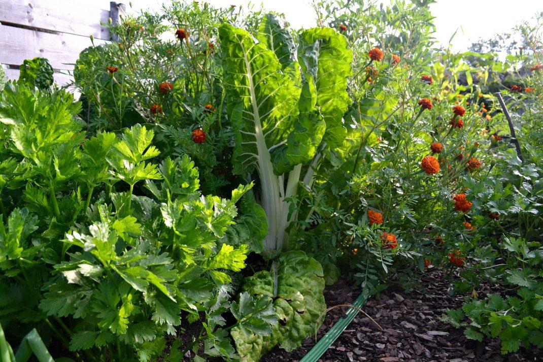 Massor av grönsaker på rad.