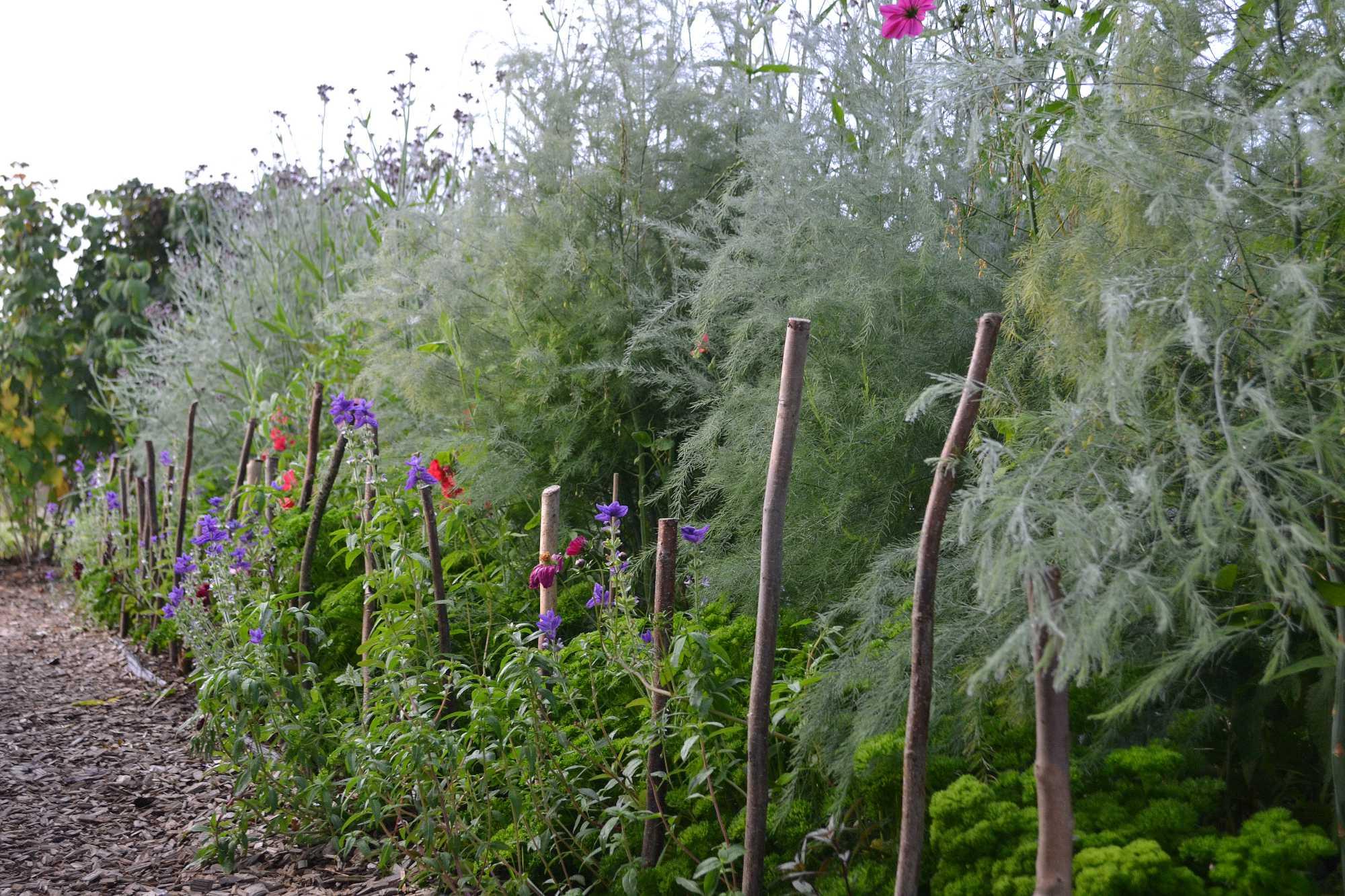 En frodig grön plantering med färgklickar från sommarblommor i.