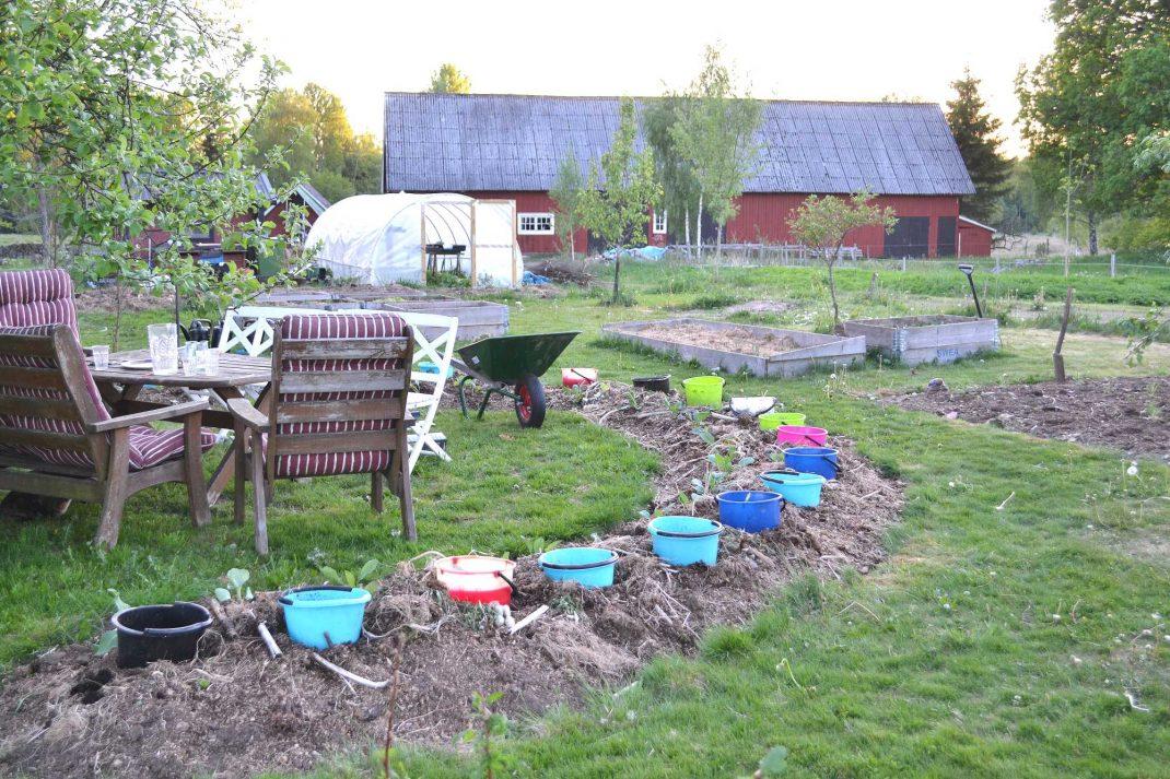 Trädgården i kvällsljus med en uteplats som ramas in av en lång täckodlad bädd med hinkar i.