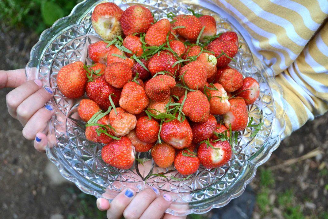 Ett stort fat med jordgubbar bärs av barnhänder med blått nagellack.