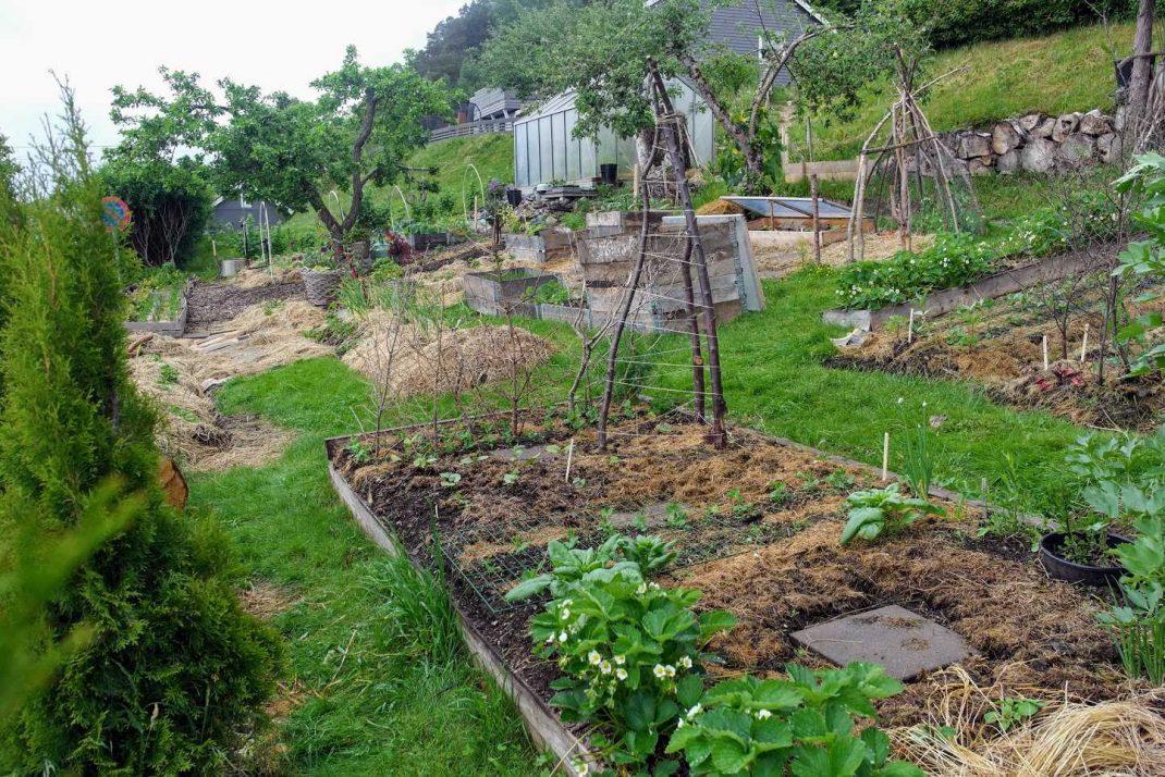 En köksträdgård med täckodlade bäddar.