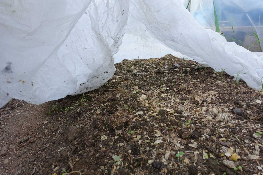 Jord under fiberduk. Growing vegetables in dry soil, under the garden cloth.