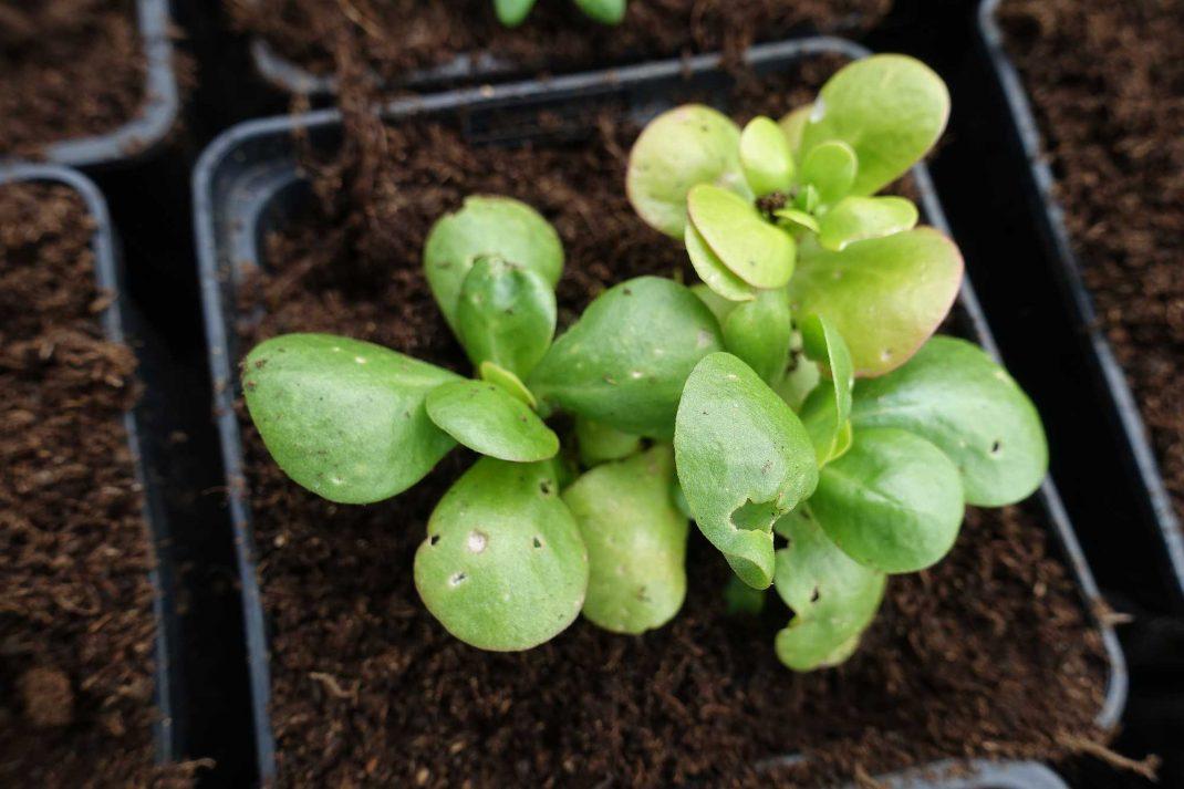En liten planta med gröna blad i kruka.