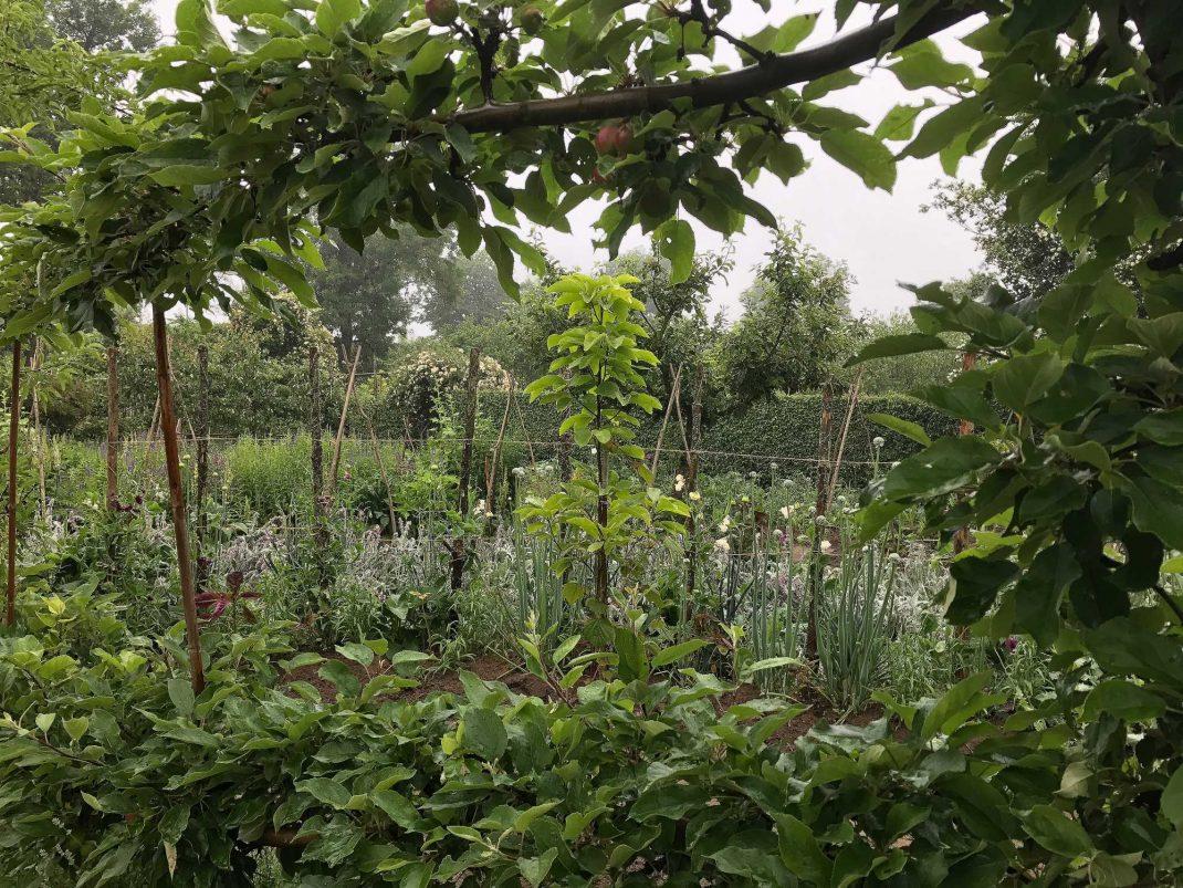En ram av fruktgrenar med utsikt över köksträdgården.