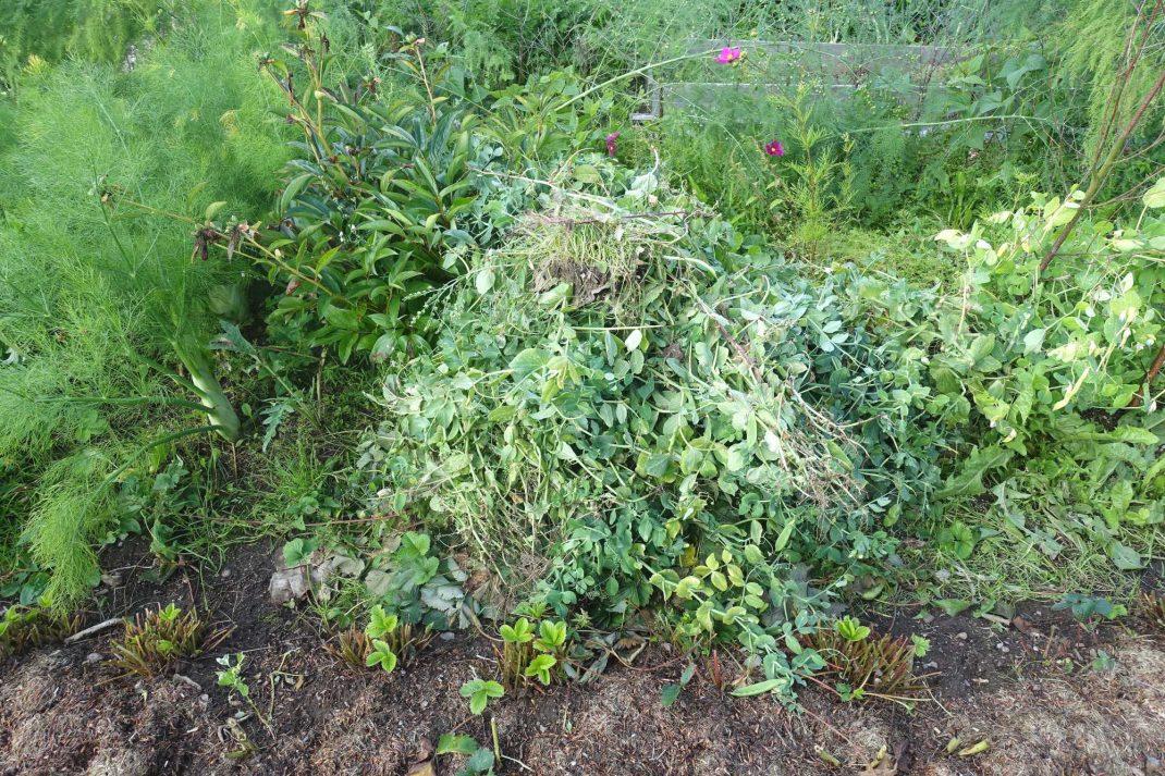 Bild på en hög med nerklippta växtdelar.