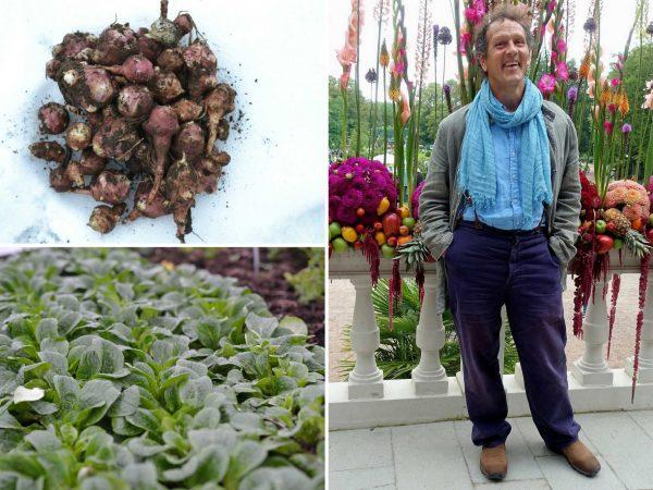 Bildkollage med Monty Don och vintergrönsaker.