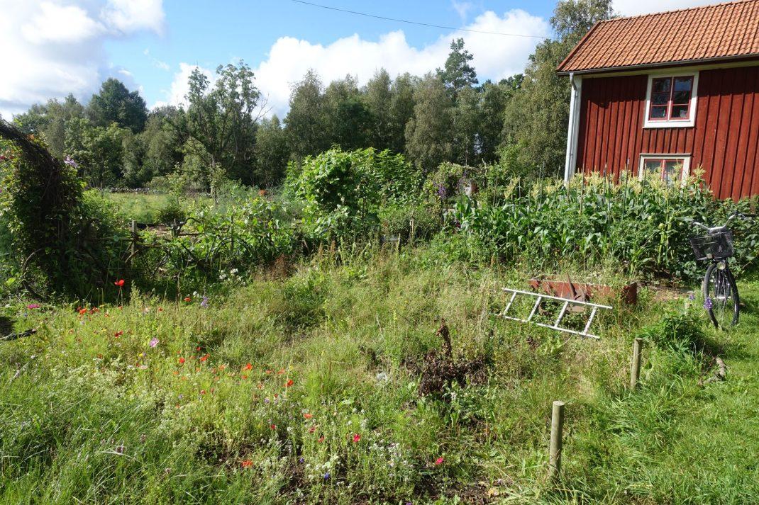 En del av trädgården med mycket ogräs.