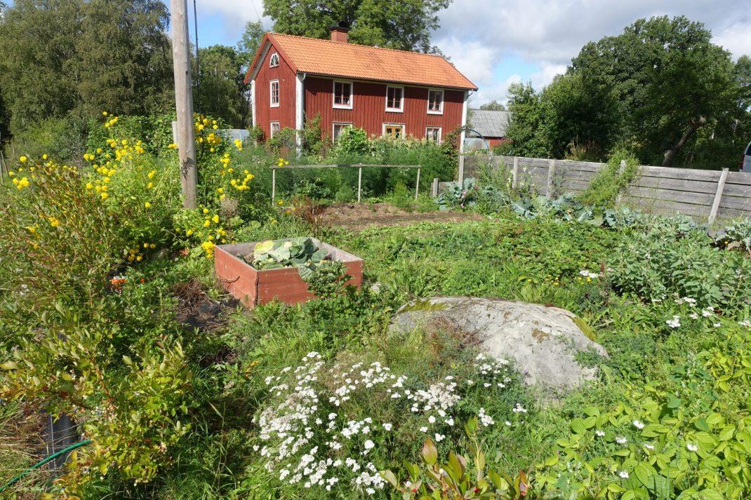 Köksträdgården