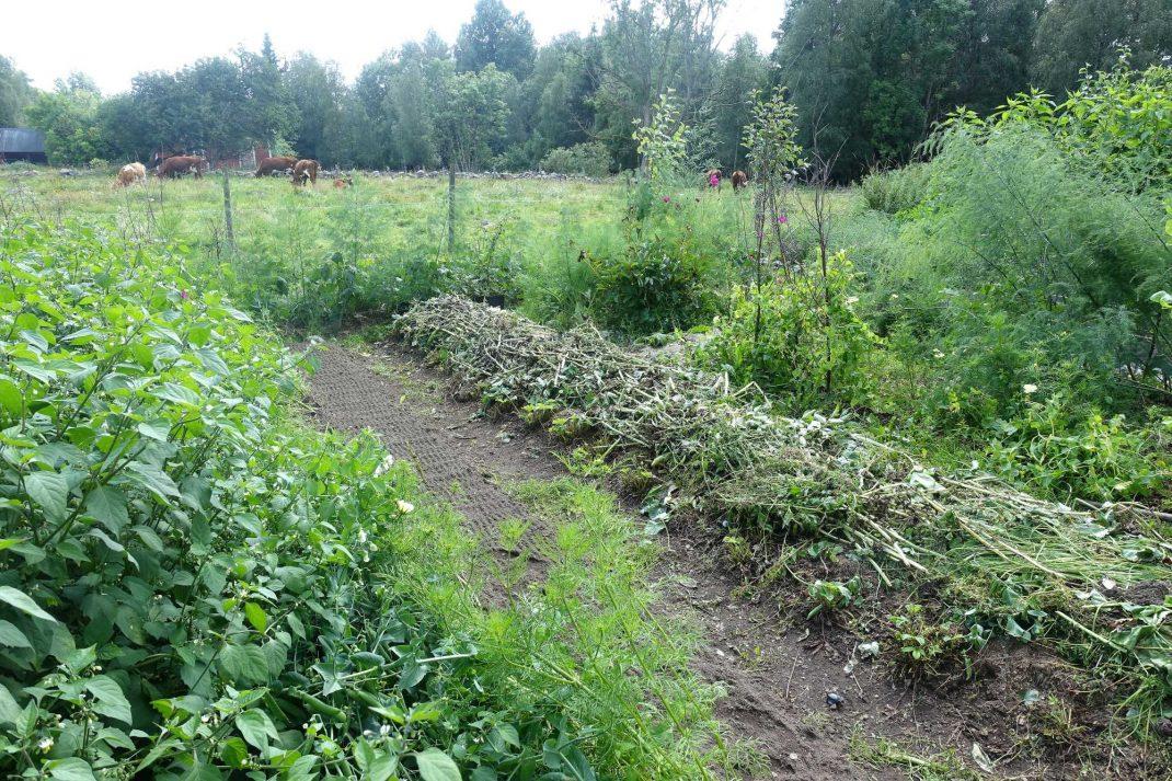 Bild från köksträdgården med odlingsbäddar sommartid.