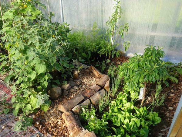 Bild på växtplatsen när den är färdig.