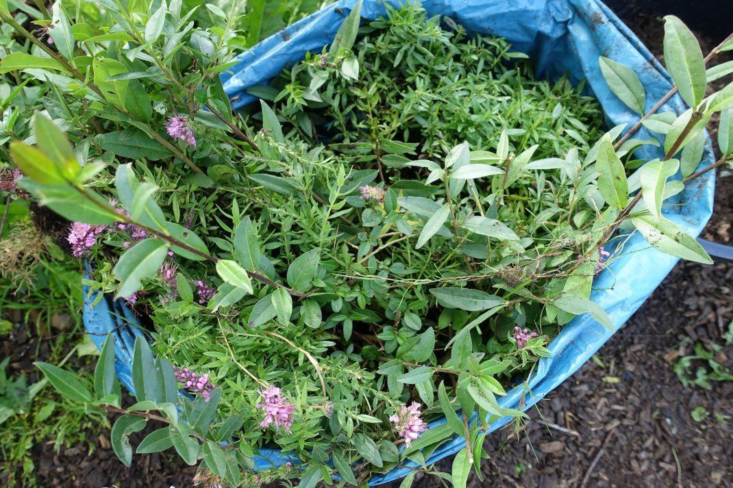 En säck med plantor