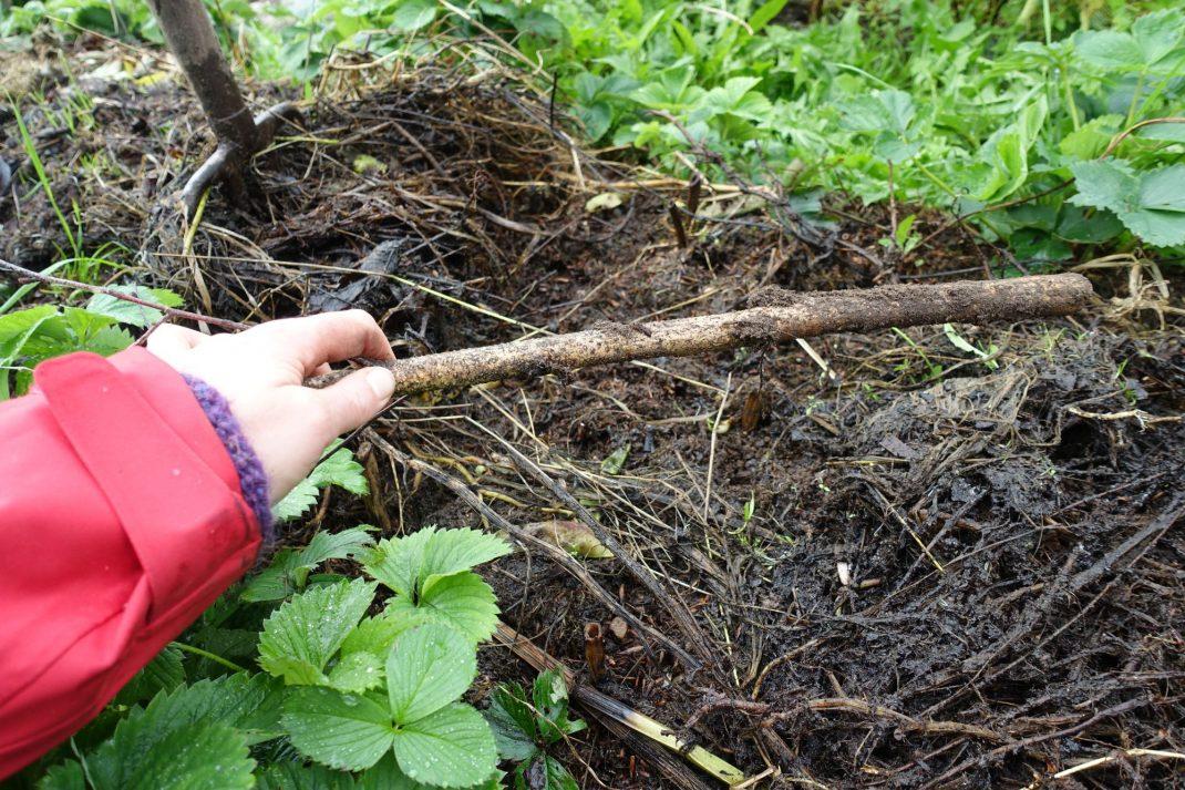 En hand håller en pinne ovanför täckodlad jord.