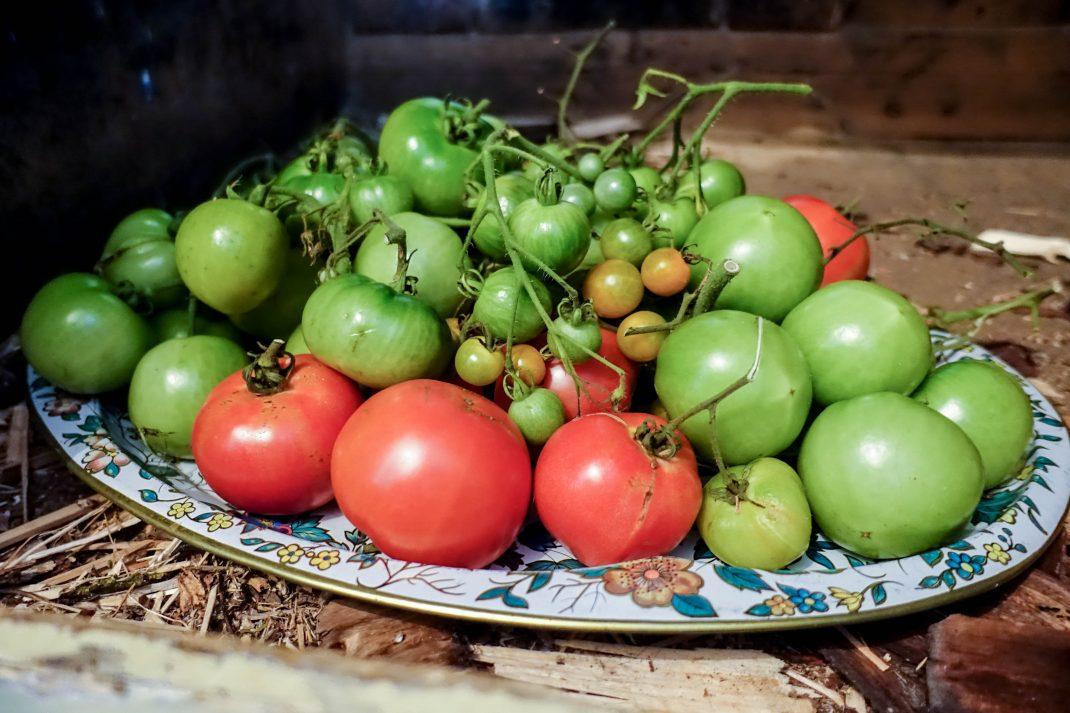 Tomater ligger på en stor bricka.