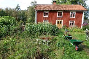 En övervuxen del av trädgården framför huset.