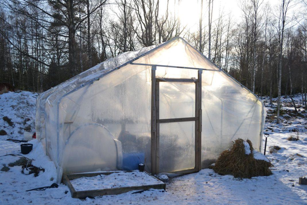 Tunnelväxthus mitt i vintern