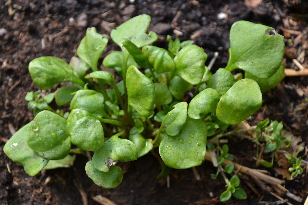 En liten tuva med bladgrönt.