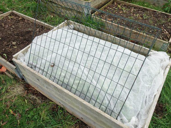 En pallkrage odling där en av lådorna är täckta med fiberduk.