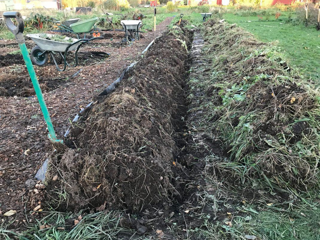 Limpor i köksträdgård