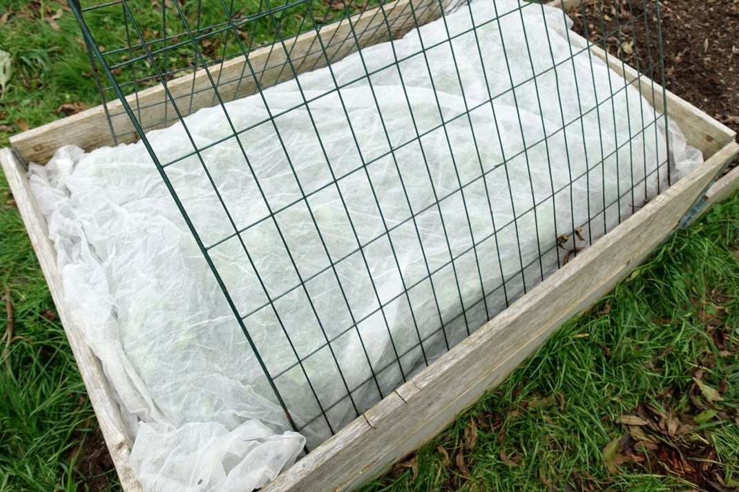 En pallkrage täckt med kompostgaller och fiberduk. A pallet collar bed with mesh wire panels and plant cover.