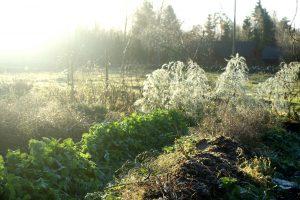 Bild på disig och höstig trädgård.