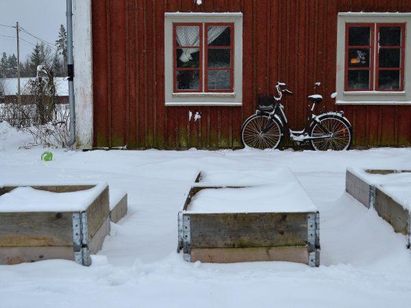 Pallkragar uppradade nära huset, täckta av snö.
