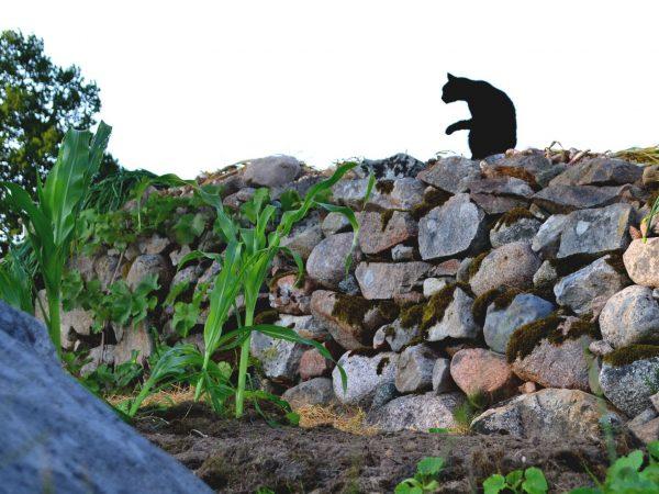 En katt sitter på en stenmur