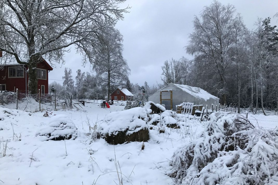 Bild på trädgården med bostadshus och tunnelväxthus ganska nära.