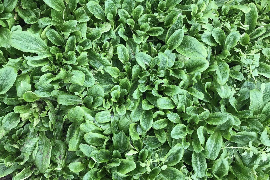En bild om helt täcks av gröna blad.
