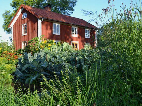 En bild på Skillnadens Trädgård i full sommarskrud, med bland annat kålplanteringar och jätteverbena framför det röda trähuset.