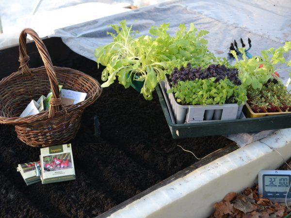 På en varmbänk står en korg med fröer och brickor av massor av försådda småplantor. I den svarta jorden är det uppdraget linjer.