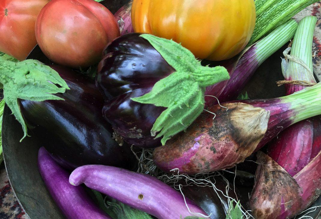 Vackra aubergine i olika färger