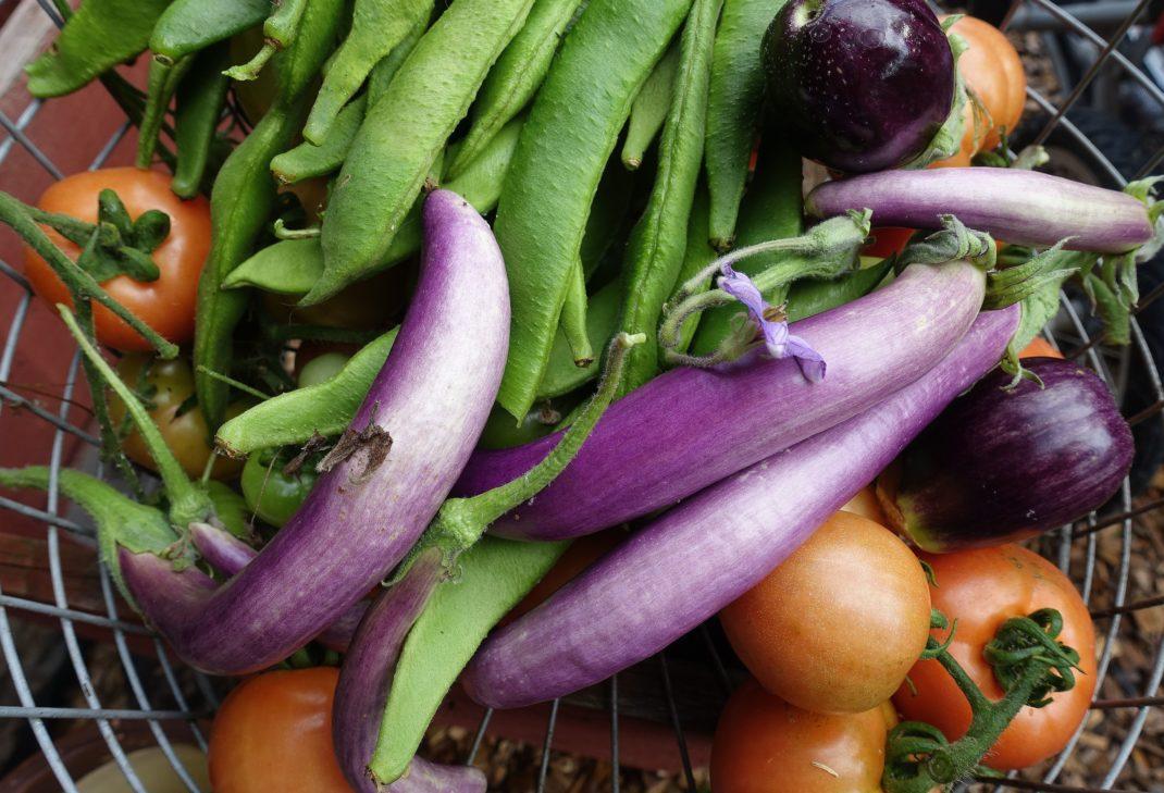 En korg med nyskördad aubergine, tomat och bönor.