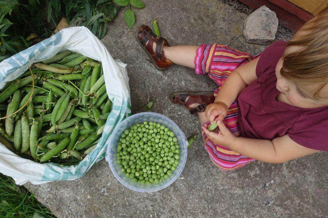 barn rensar gröna ärter