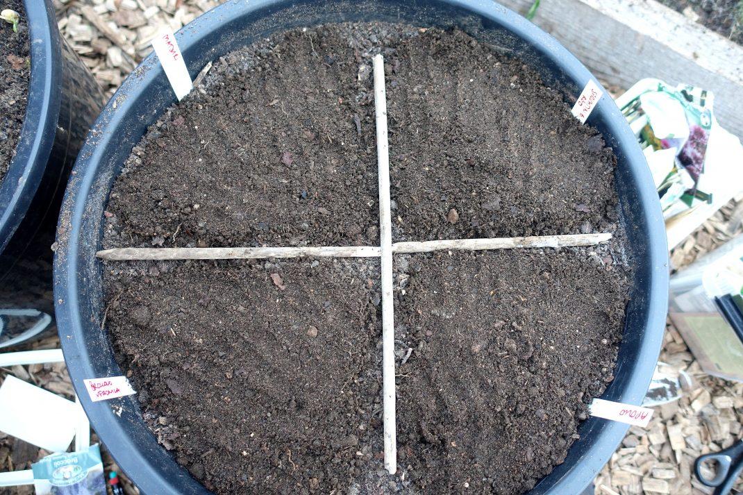 Kruka med jord, uppdelad i tortbitar.