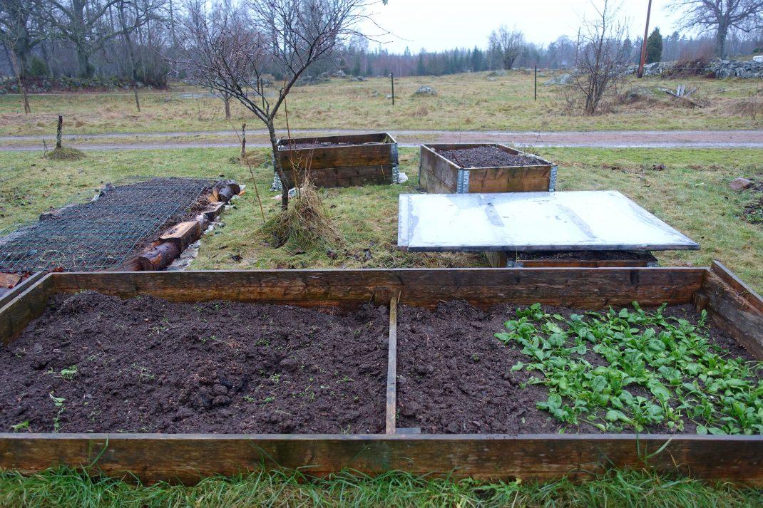 Flera odlingslådor och ramar täckta av lock.