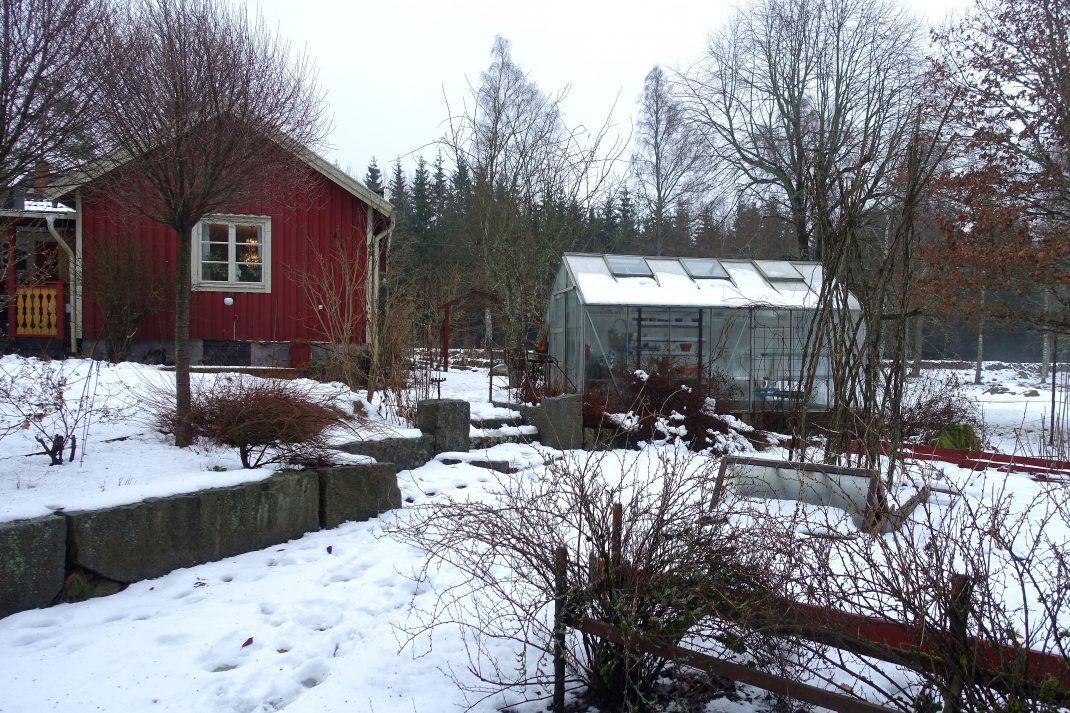 En vintrig trädgård med bostadshus och växthus.